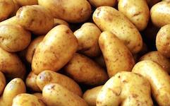 hnojení brambor