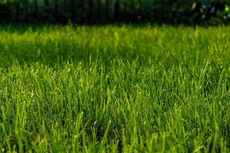 nejlepší hnojivo na trávník