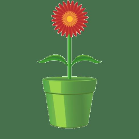 schnell wachsende Zimmerpflanzen