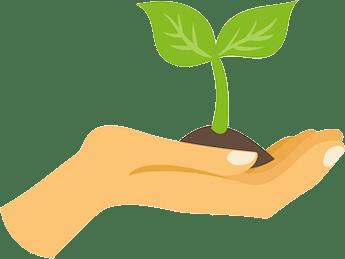 Manifestationen von Mängeln in der Pflanzenernährung