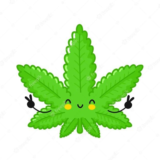 hnojivo na marihuanu