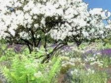 Hnojení trávníku na jaře